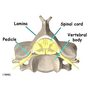 Burd PT Whiplash Spine Anatomy