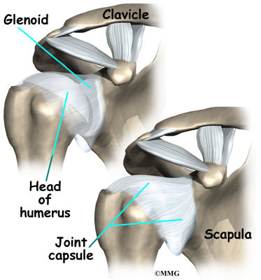 Burd PT Shoulder Ligaments