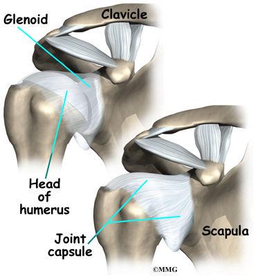 Burd PT Shoulder Ligaments