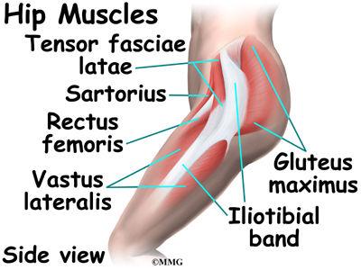 Burd PT Hip Muscles