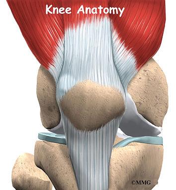 Burd PT Knee Anatomy