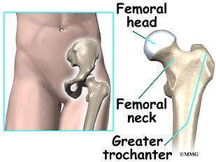 Burd PT Hip Bones & Joints