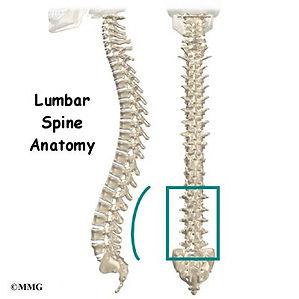 Burd PT Lumbar Spine Anatomy