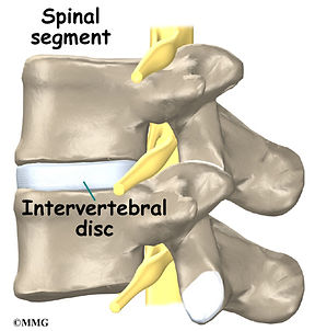 Burd PT Spinal Segment
