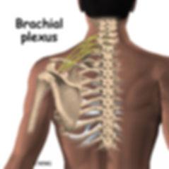 Burd PT Shoulder Adhesive Capsulitis Plexus