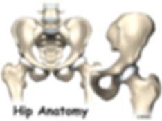 Burd PT Hip Anatomy