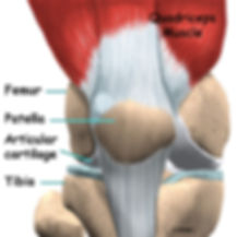 Burd PT Knee Arthroplasty Anatomy