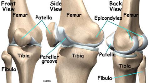 Burd PT Knee Bones and Joints
