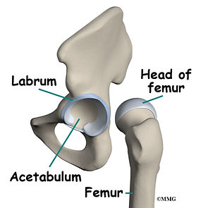Burd PT Hip Labral Tear Anatomy