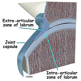 Burd PT Hip Labral Tear Zones
