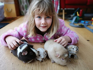 Bea and  her guinea pigs