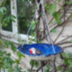 Robin birdbath.jpg