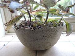 Coiled planter