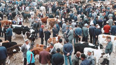 904 Livestock Market.jpeg