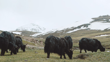 1205 Kyrgyzstan.jpeg