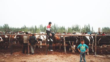902 Livestock Market.jpeg