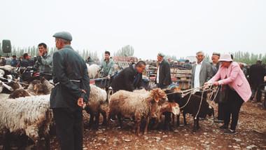 901 Livestock Market.jpeg