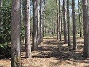 treesource org.jpg