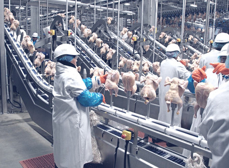 Meat and Poultry Processing Plants Face Risky Demands