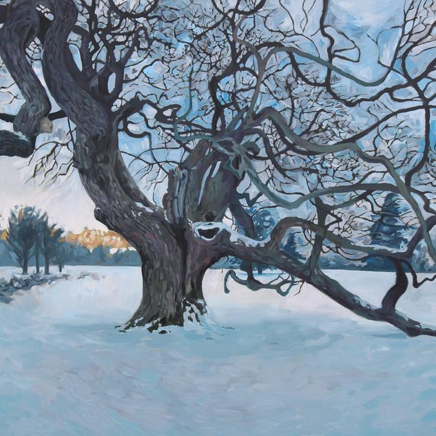 Wilcox's Oak  (2013)