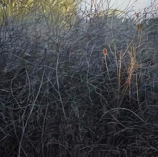 Dog Rose, Blackthorn, Teasel, Winter Sun