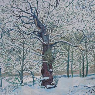 Sweet Chestnut in Snow