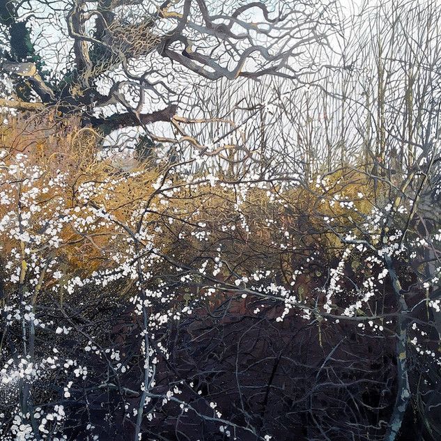 Blackthorn, Hazel, Oak and Ash