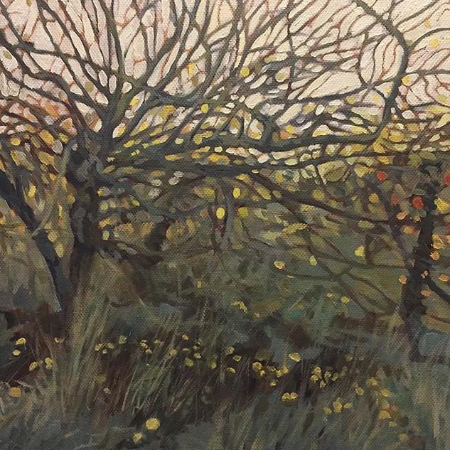 Overgrown orchard.