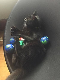 Stress ball cat looking gorgeous as alwa