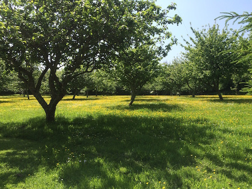 Your Orchard for Roaming and Apple Picking