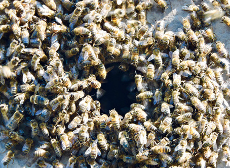 🐝 Happy National Bee Day 🐝