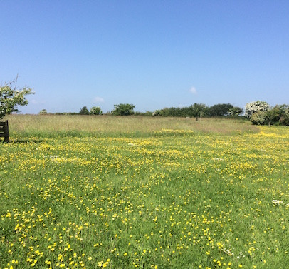 The Meadow in May