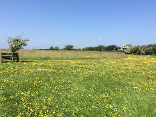 The 5 Acre Meadow in Full Bloom