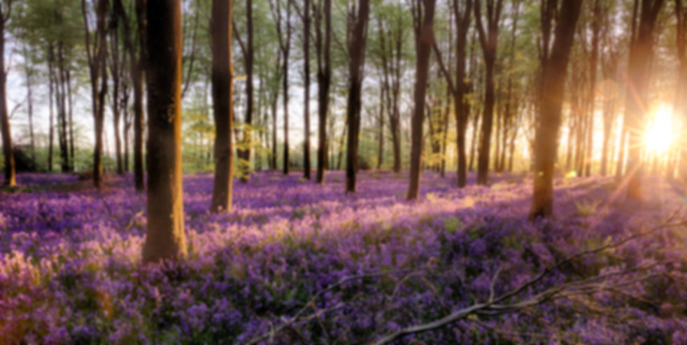 Purple Canopy for Women Group.jpg