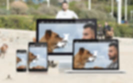 TC DOG CARE - Website Launch.jpg