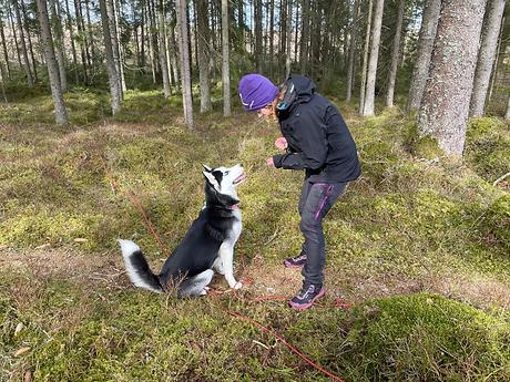 Hundträning-Borås.png