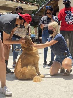 We love animals over here
