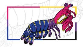 Bisexual Non-Binary Pride Flags Mantis Shrimp