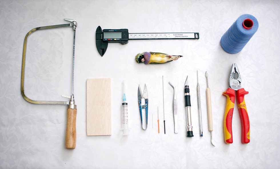 Tools of the trade and raw taxidermy