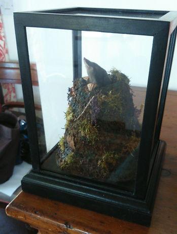 Mole in situ