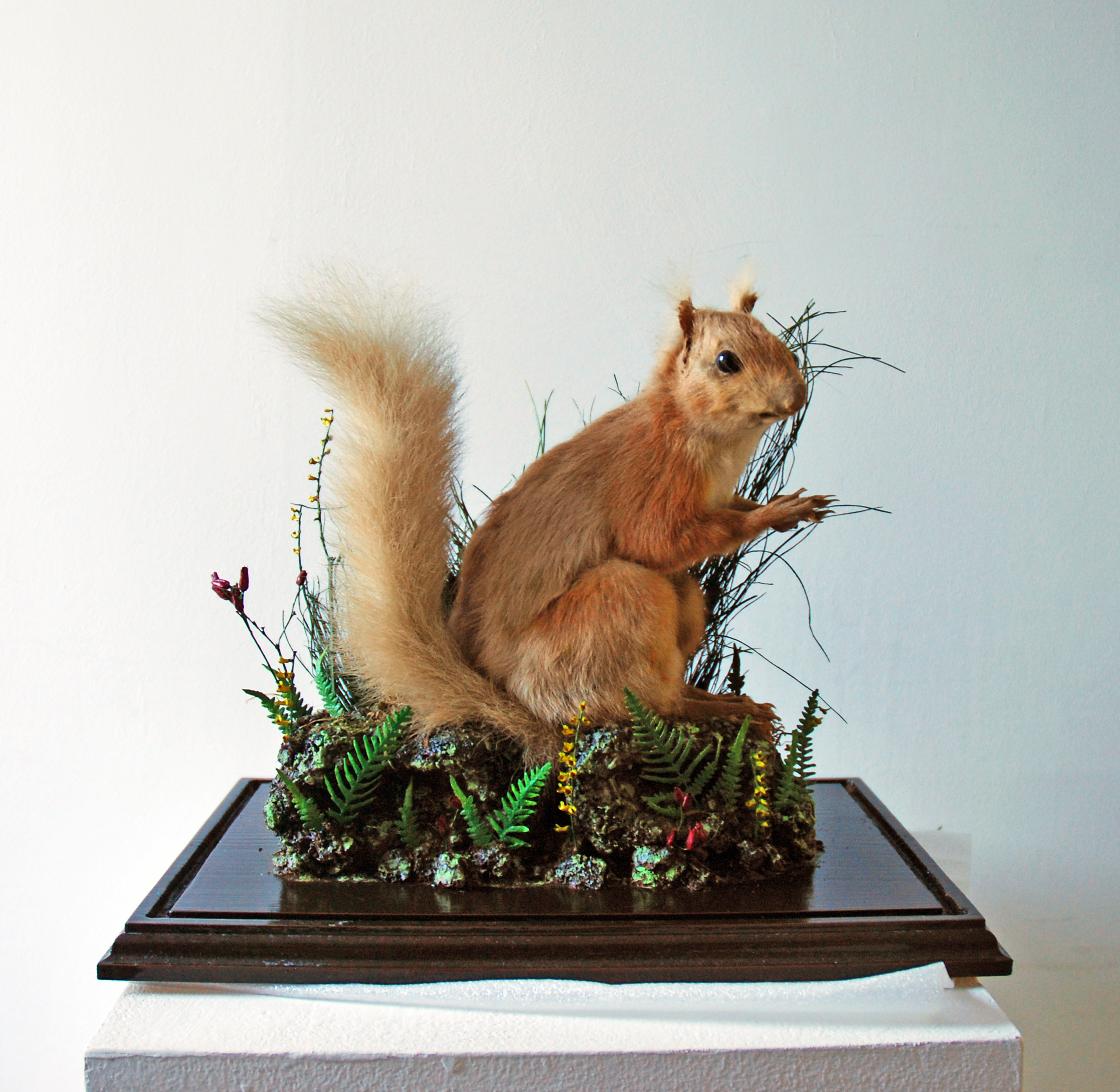Squirrel without the glass