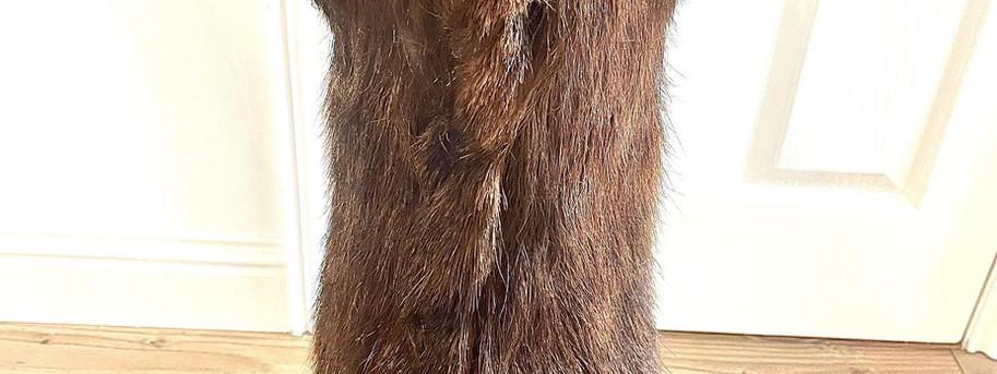 after restoring with fur restoration