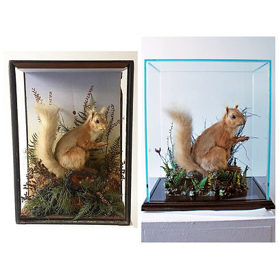 before and after squirrel.JPG