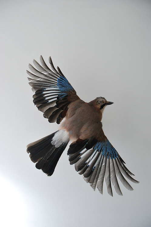 Flying Jay