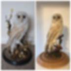 owl case restoration