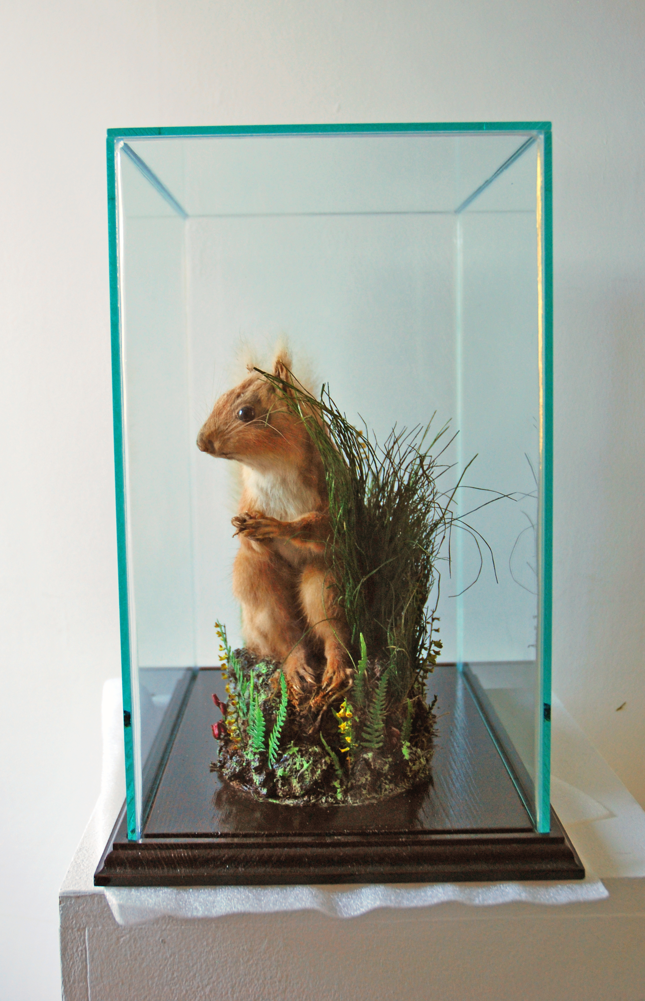 Side of squirrel with glass