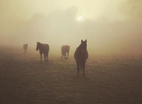 Foggy Morning Walks!