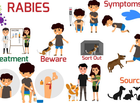 WHAT IS RABIES AND YOUR RISK OF CATCHING IT?