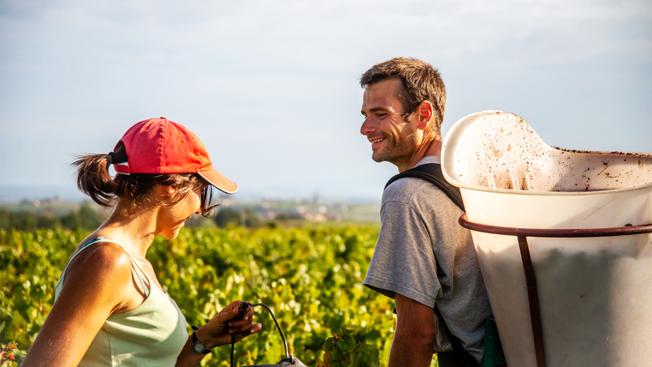 Biodynamischer Wein aus dem Beaujolais