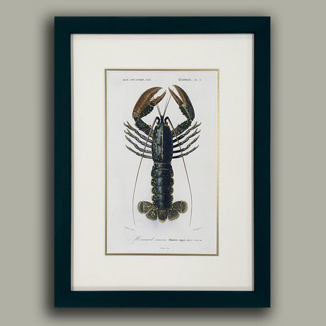 Antique Lobster Illustration